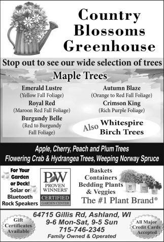 Stop out to see our wide selection of trees